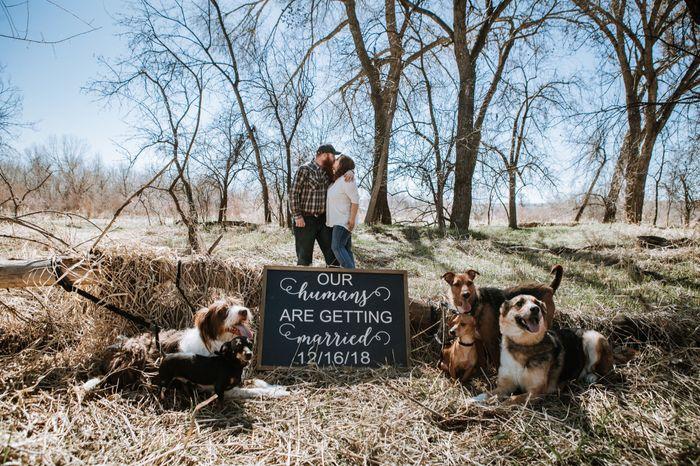 Engagement photos! 7