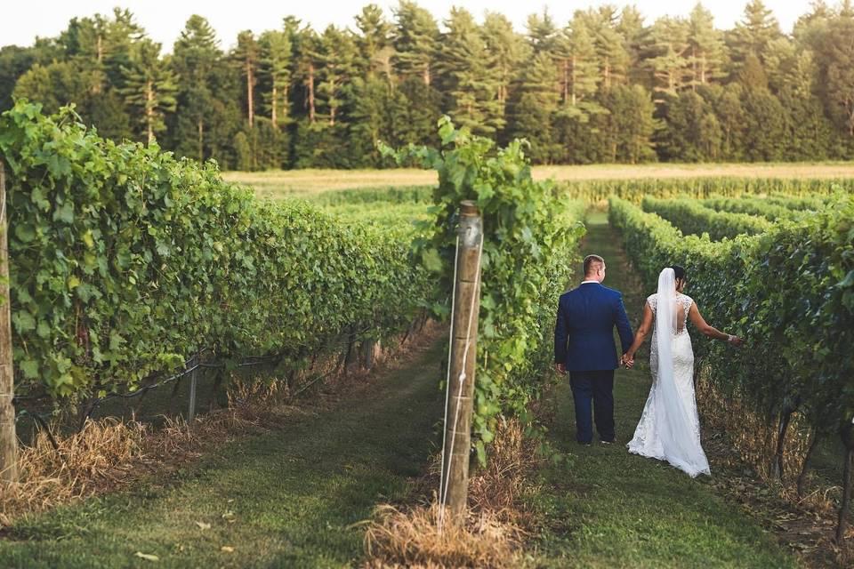 August vineyard