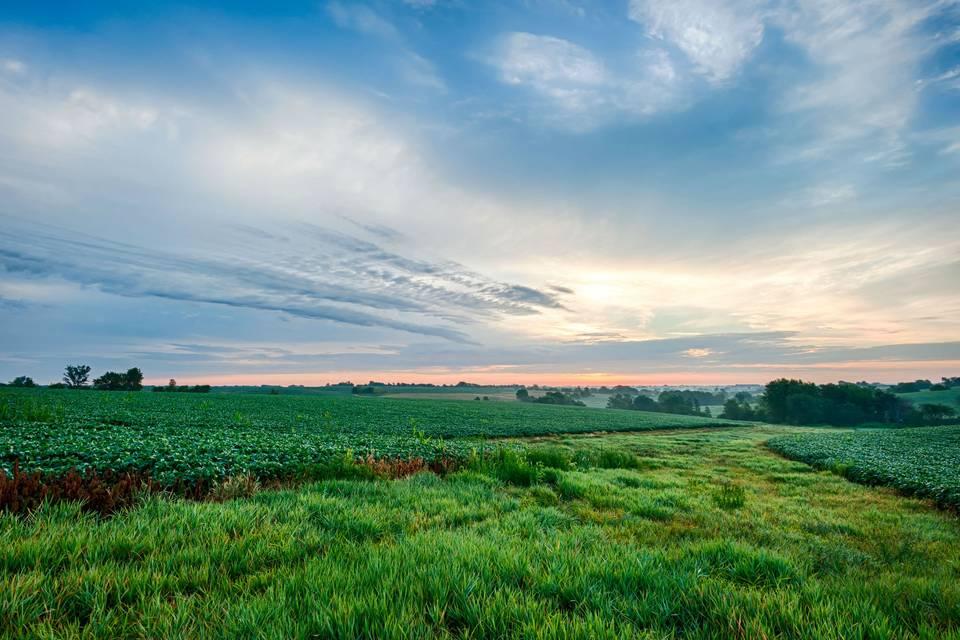 Vast fields of the farm