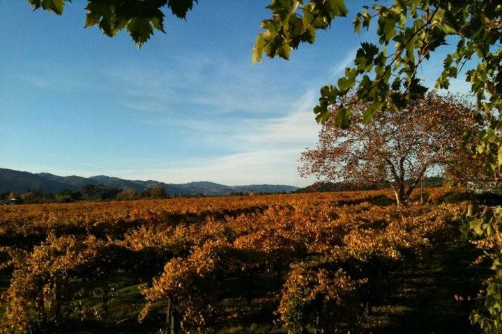 Seebass Vineyards and Family Wines
