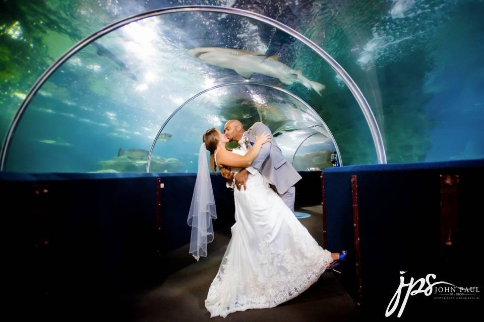 Nautica Aquarium