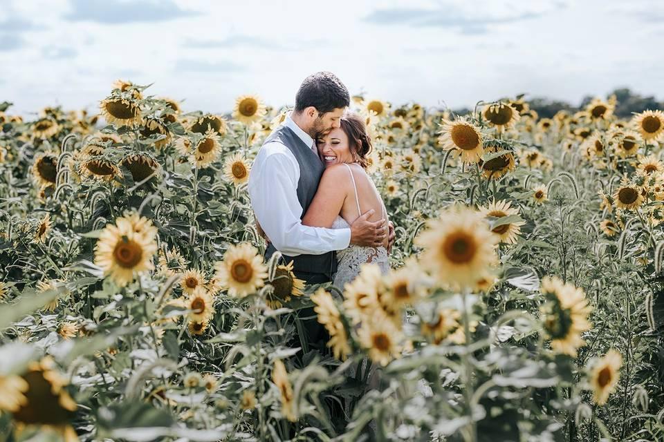 Sunflower fields Des Moines