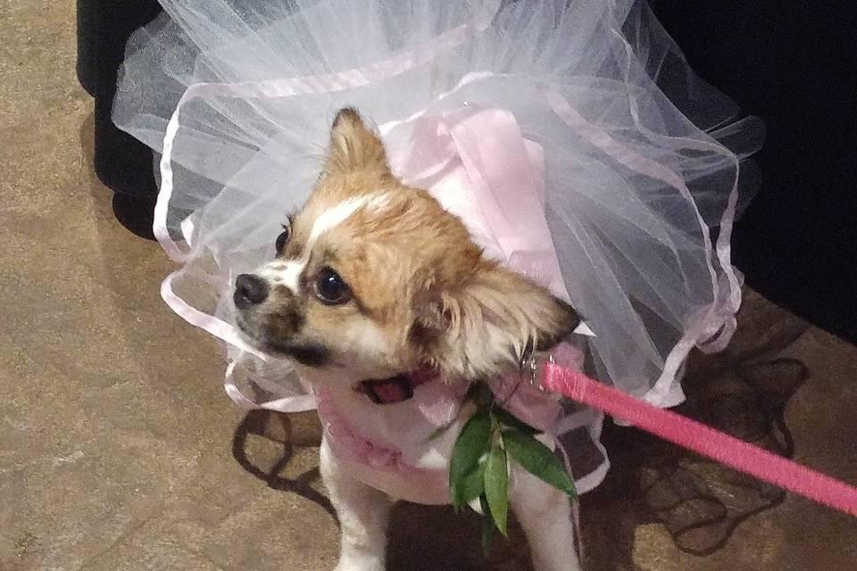Bridesmaid ever... bride never