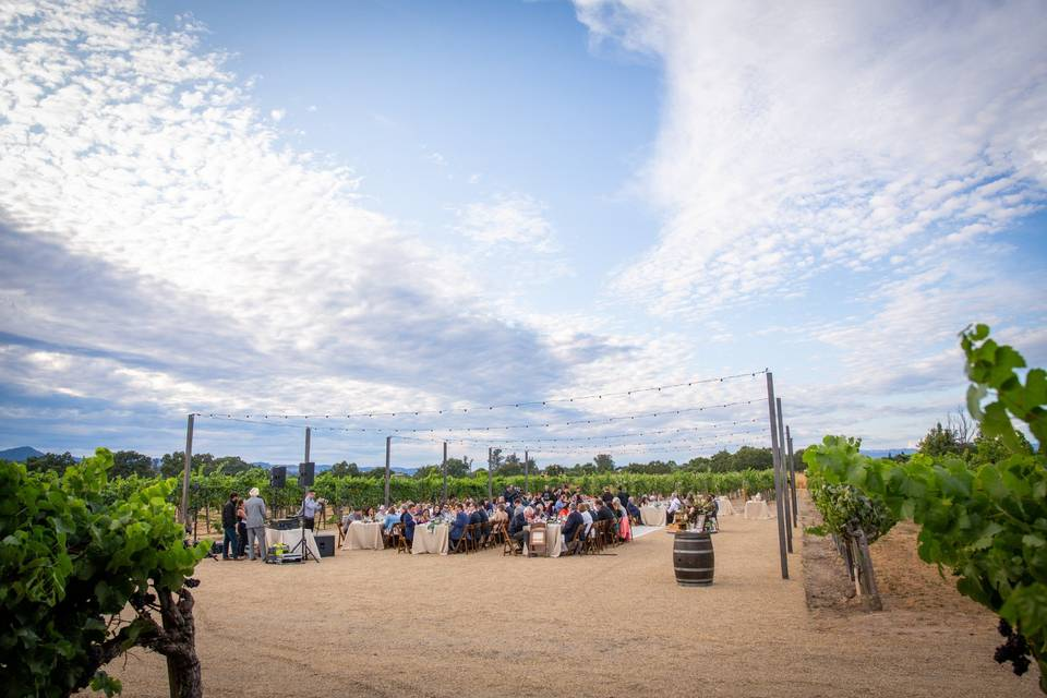 Dining inside the vines