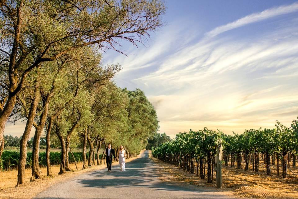 Pellegrini Winery