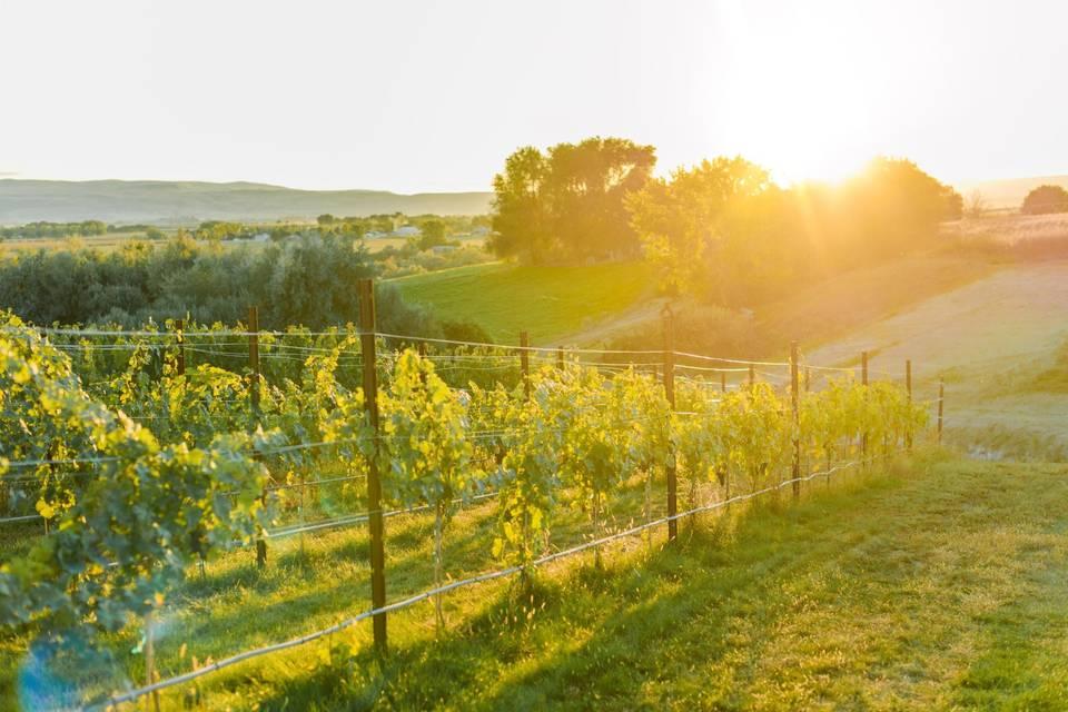 Kindred Vineyards