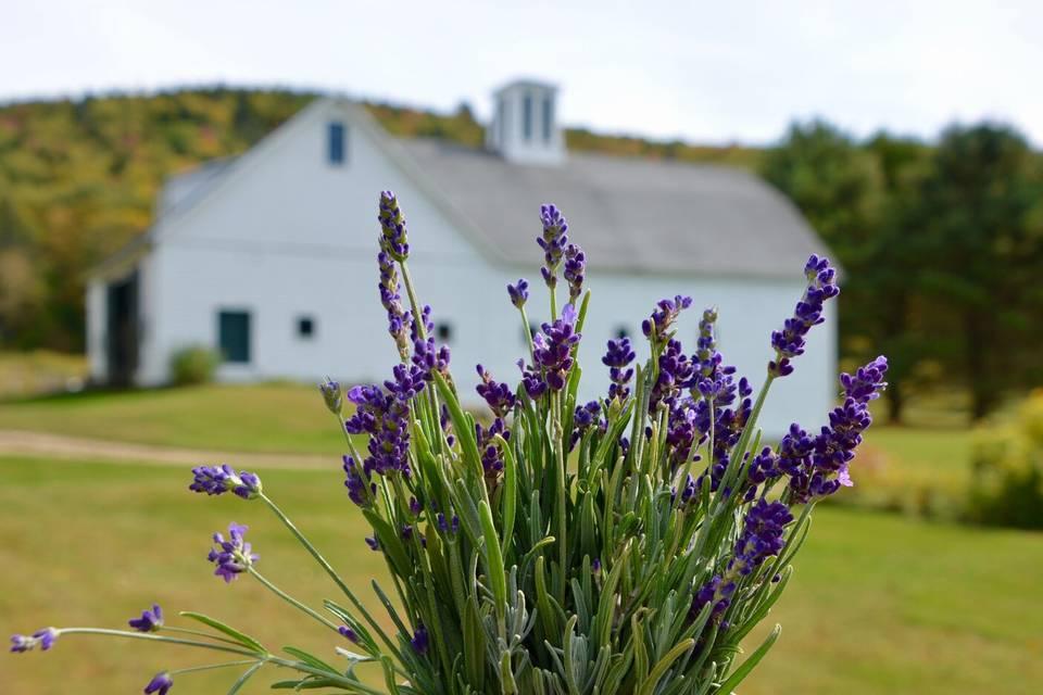 The White Barn Farm