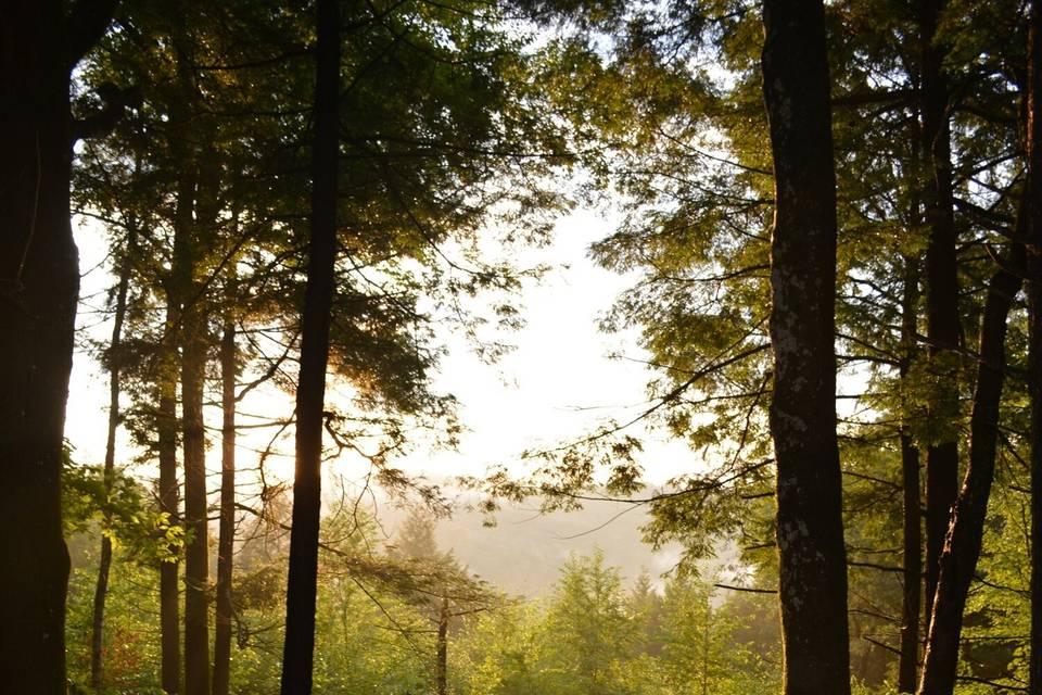 Nearby woodland