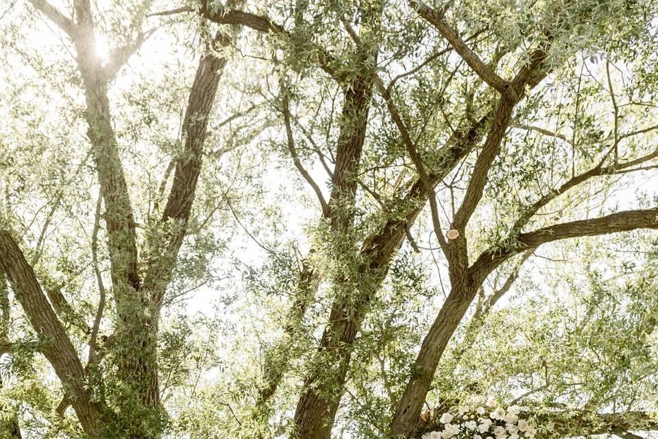 Bride & Bride under the willow
