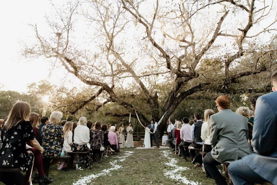 Century Tree Ceremony