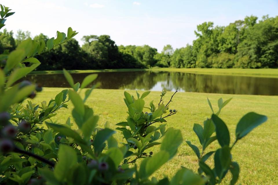 Gardens, lawns, and lakes