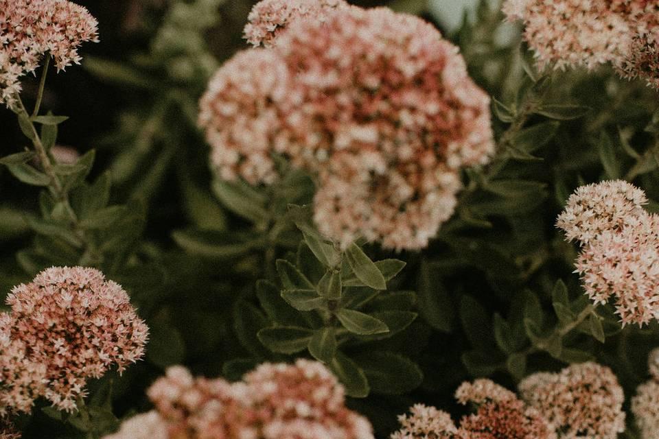 Morgan Farm Floral
