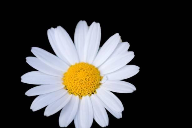 Oops A Daisy Florist