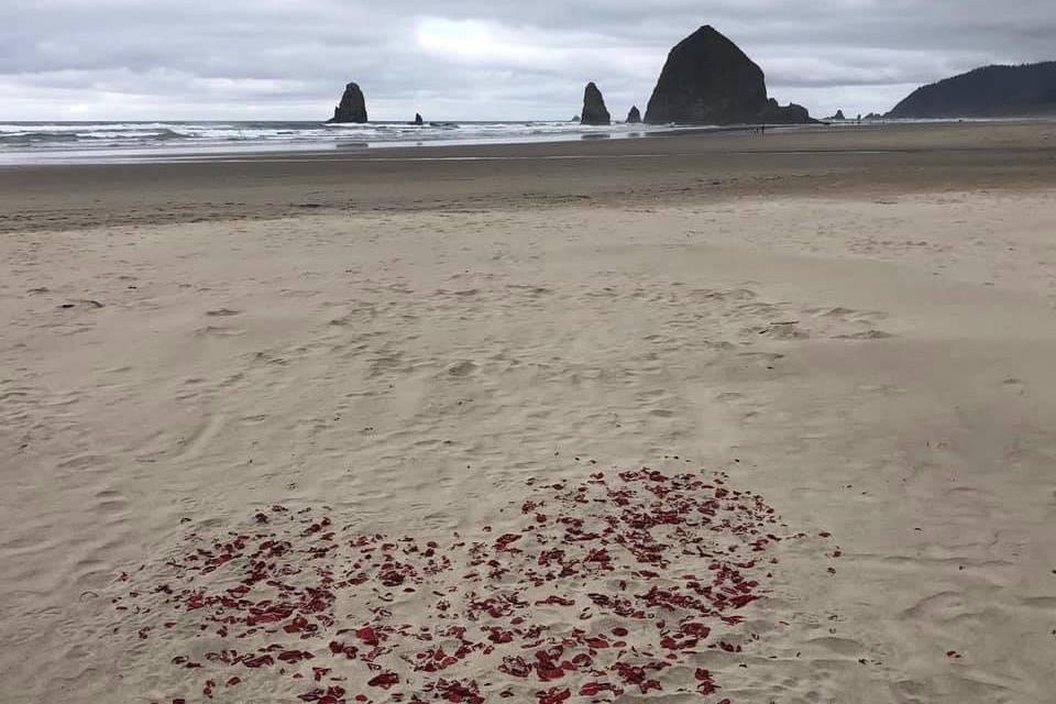 E & T Beach Wedding Venue 2021