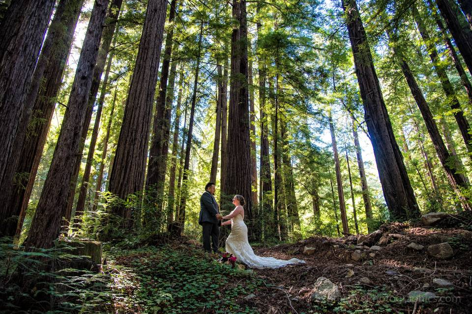 Glen Oaks Big Sur Wedding