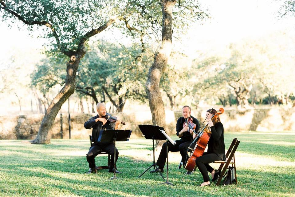 Terra Vista Strings