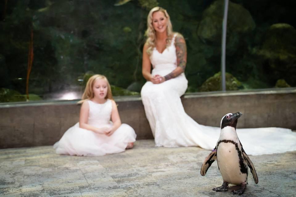 Penguin Aisle Walk