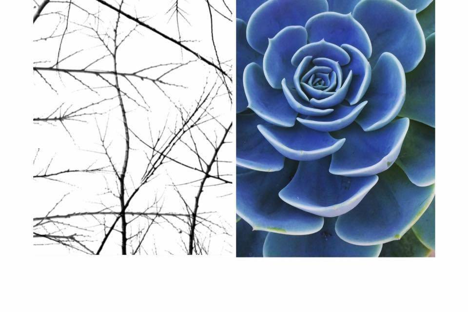 Branching Elements