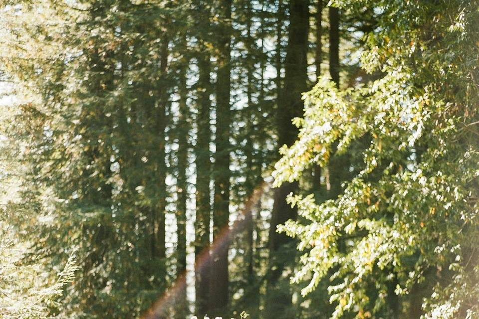 Hilltop Hacienda Redwood Grove