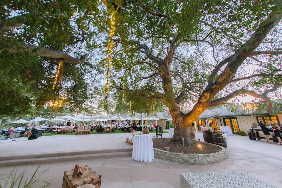 Classy rustic wedding at Upper Las Virgenes Open Space Preserve (Elizabeth Burgi Photography)