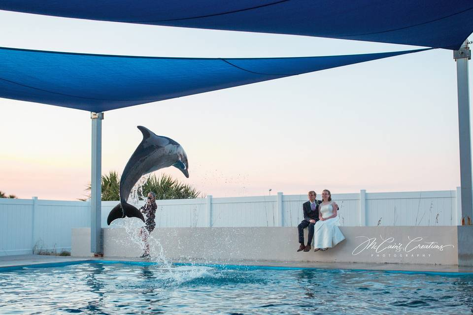 Private photos with dolphins