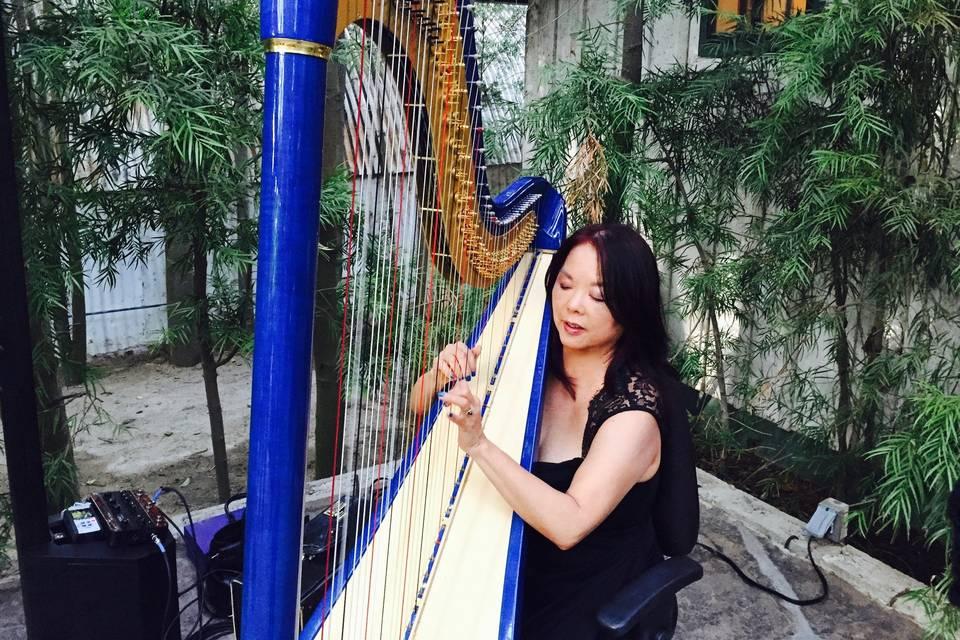 Harp Music By Vonette & Musical Networks