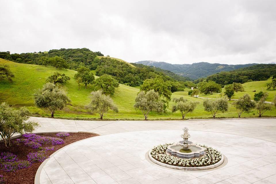 Luscious greenery