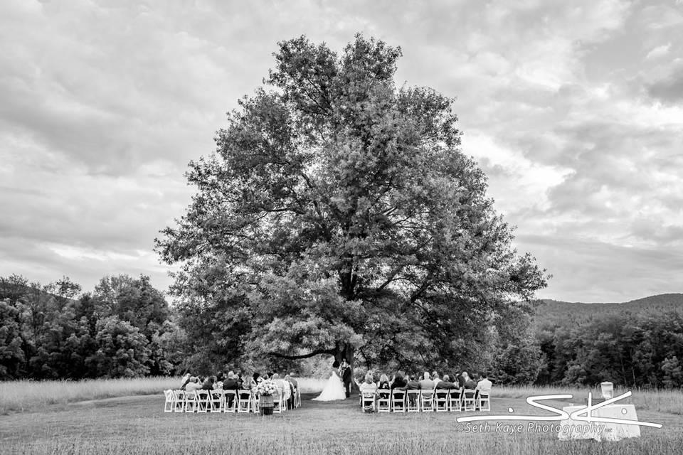 Ceremony tree - Seth Kaye Photography