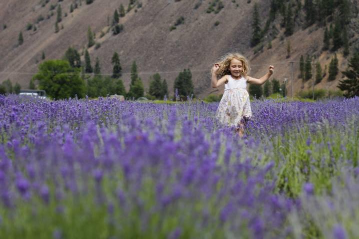 Lavender Garden, Paula's Garden, Paradise Gardens, Montana  Flower Fairies