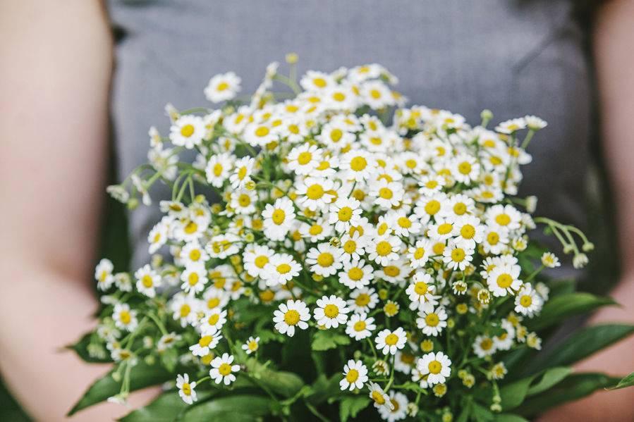 StrayCat Flower Farm