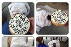 The Dog Bakery