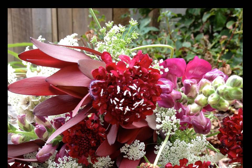 Playful bouquet with a Pop of Color and raspberry scabiosa, burgundy snapdragons, Queen Anne's Lace and leucadendron