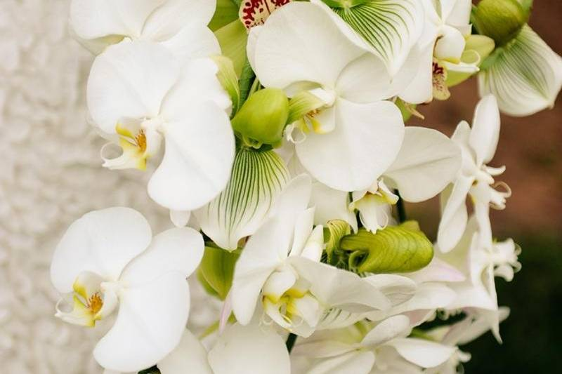 Waterfall orchid bouquet