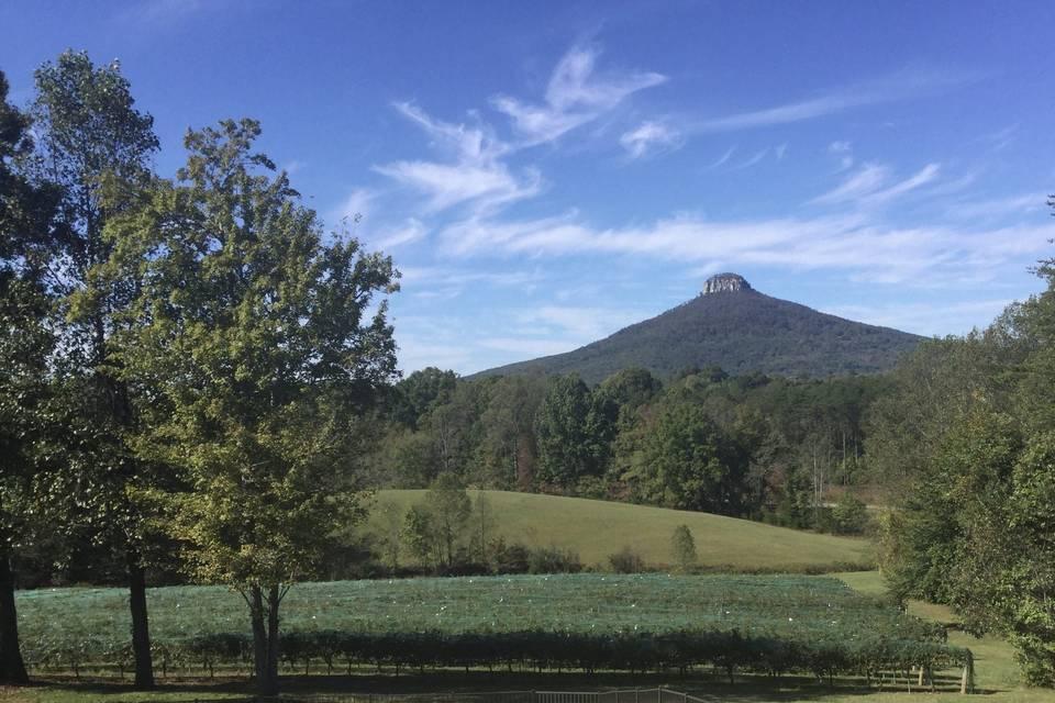 Pilot Mountain Vineyards & Winery