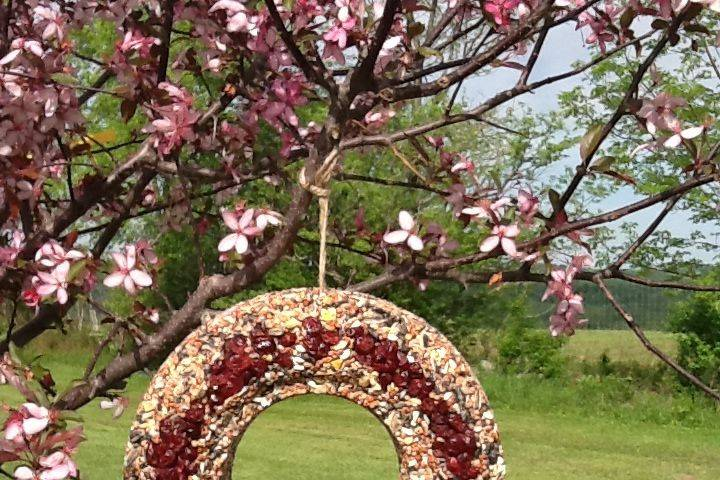 Bird Seed Wreath with Dried Cranberries