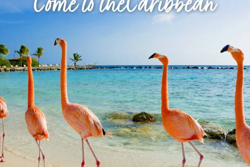 Come to Caribbean