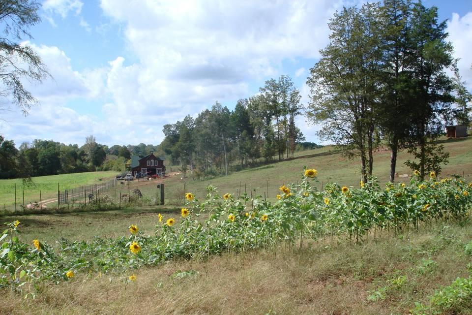 Rayburne Ridge Farm