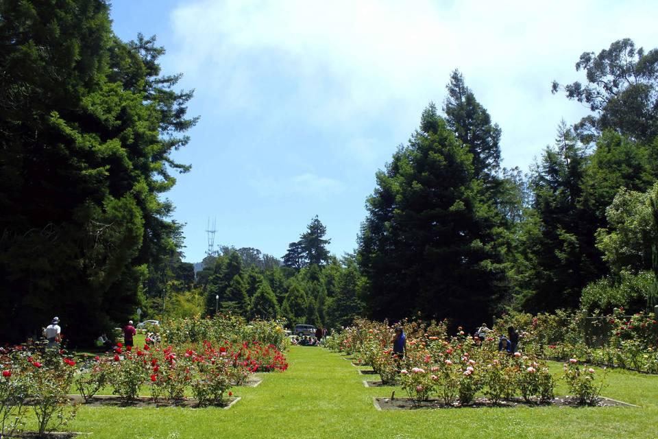Rose Garden - Golden Gate Park