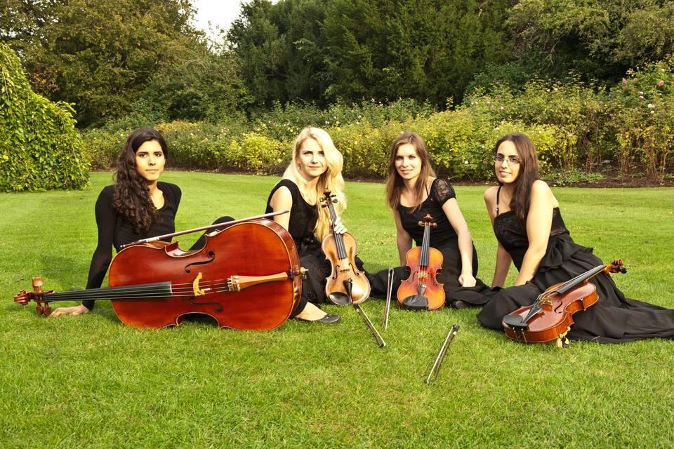 November Quartet