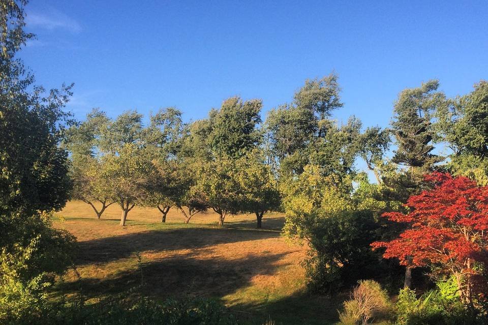 The Apple Orchard.