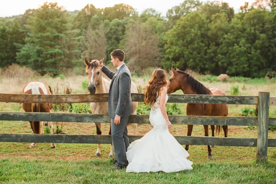 Property horses