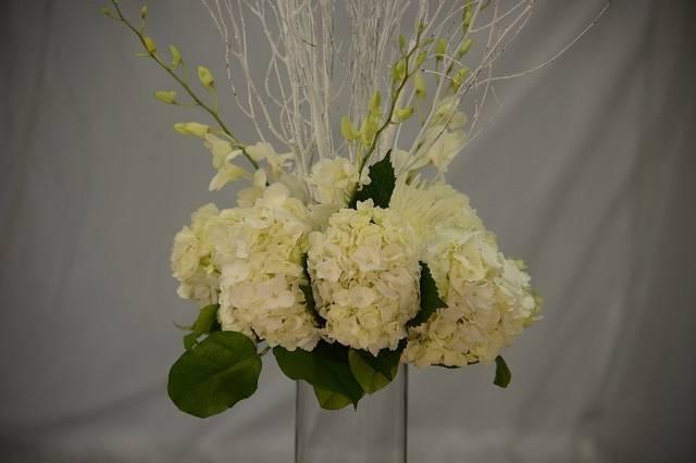 Big white blooming flowers