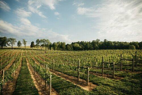 Nicewonder Farm & Vineyards