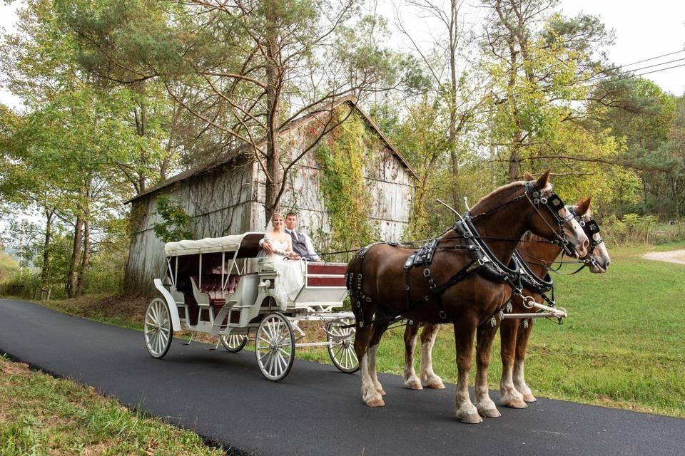 Romantic horse drawn carriage