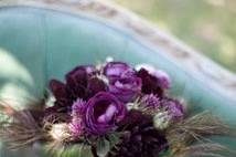 Purple garden roses & peacock feathers