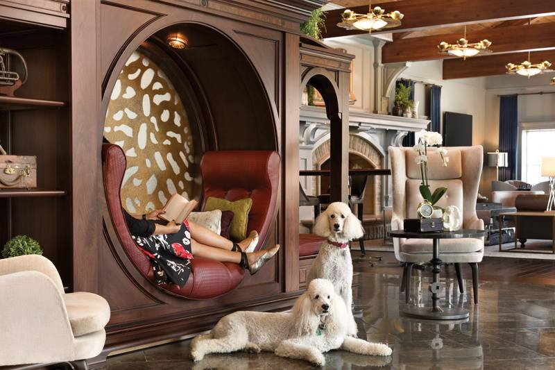 Lobby with dogs
