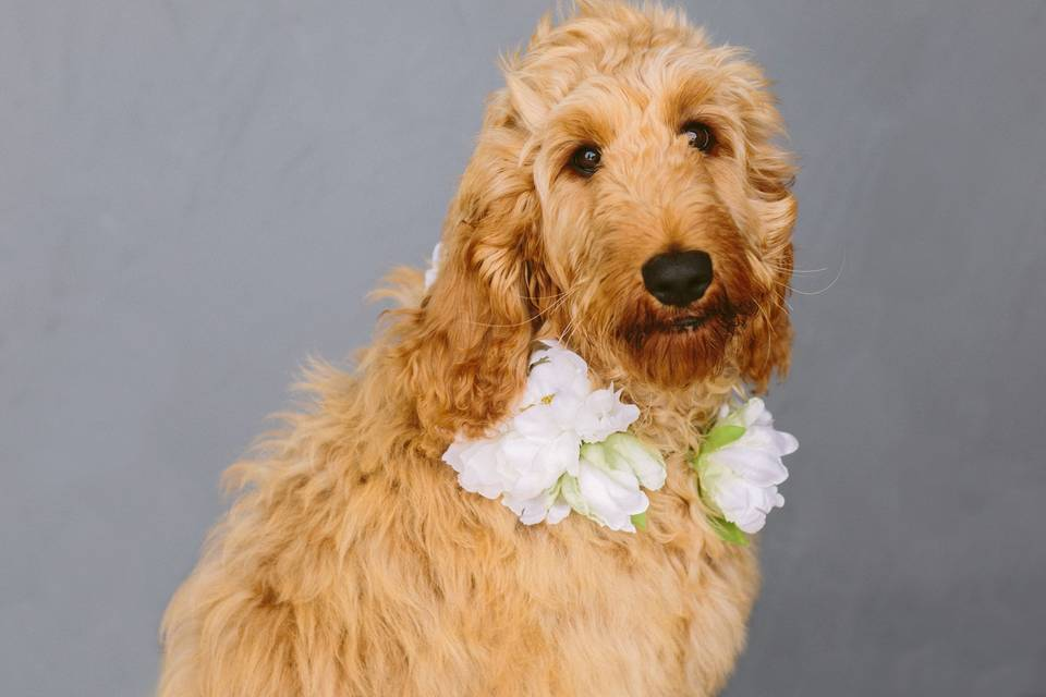 AUDREY Dog Collar