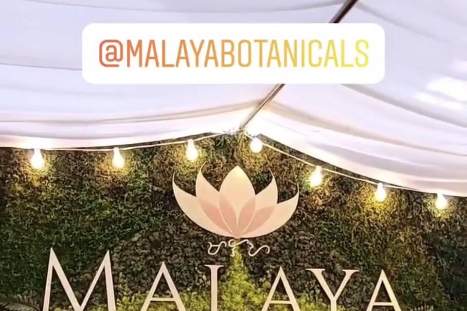 Malaya Botanicals @ Bottlerock