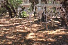 Optional Chandeliers hanging from Oaks