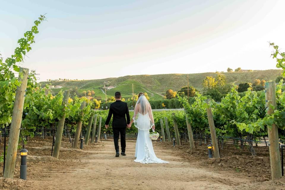 Vineyard Walk To Reception